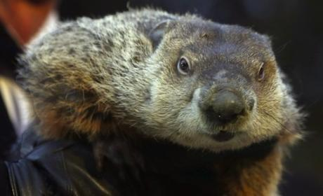 Will Punxsutawney Phil see his shadow on Groundhog Day 2015?