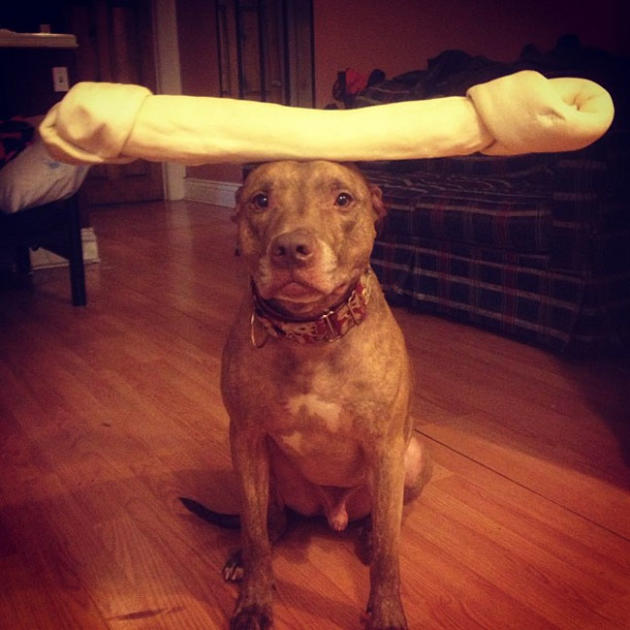 Dog Balances Bone