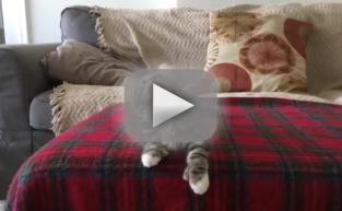 Kitten Gets Down to Uptown Funk: She's Too Hot!