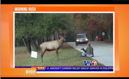 Elk Charges Photographer Who Stopped to Take Pictures, Caught on Camera!