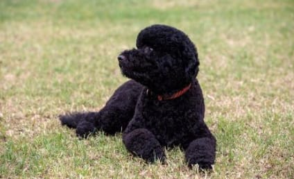 Sunny Obama Introduced as Second White House Pet, Confirmed as Cute