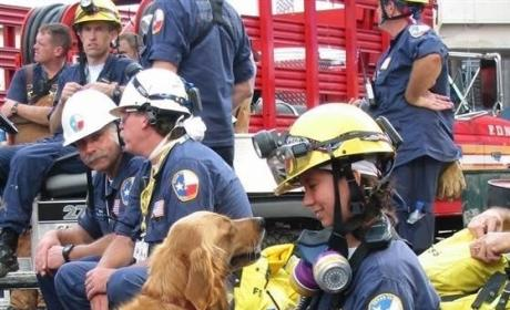 Final 9/11 Rescue Dog Dies: Goodbye, Bretagne…