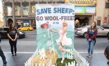 Courtney Stodden: Stop Wearing Wool!