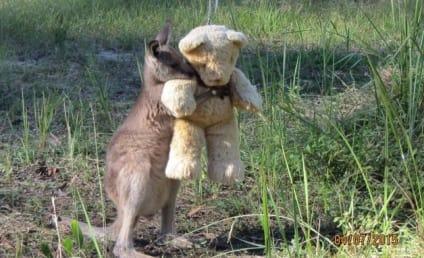 Baby Kangaroo Hugs Teddy Bear in Cutest Photo You'll Ever See