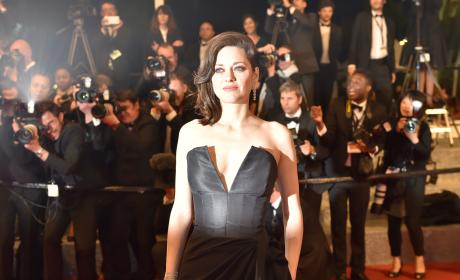 Marion Cotillard: FURIOUS Over Brad Pitt Cheating Allegations