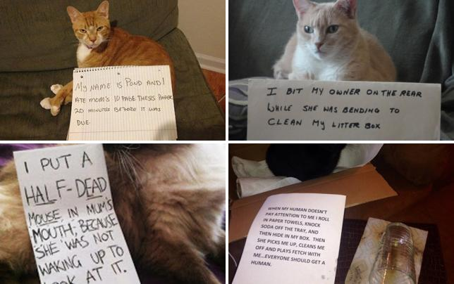 27 really naughty cats hungy for knowledge