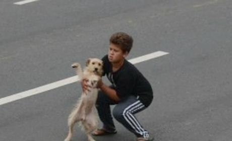 11 Year Old Boy Stops Traffic to Save Injured Dog