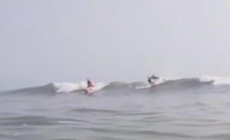 Shark Jumping: Spinner Turns Tables, Hurtles Self Over Surfer