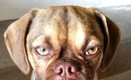 Earl the Grumpy Dog: The New, Even Crankier Grumpy Cat?