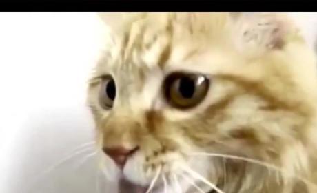 Cat Licks Vacuum Cleaner Hose, Holds it Like Bong; Reddit Goes Berzerk
