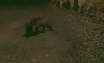 Fox Steals iPhone, Sends Text to Guy's Friend