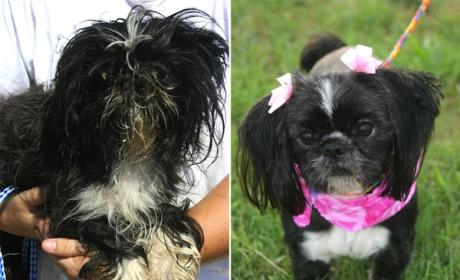 Shelter Dogs Undergo Amazing Transformations: See the Pics!
