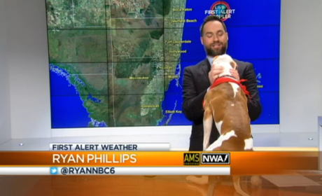 Dog Interrupts Weather Report