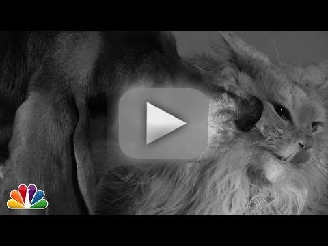 Jimmy Fallon: First Lick (First Kiss Parody)