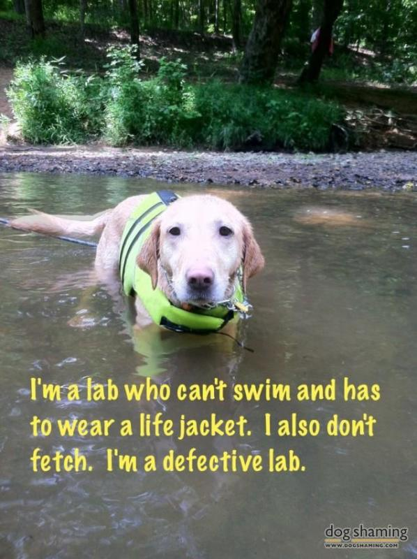 A defective lab.