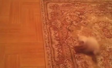 Kitten Gets Scared, Bouncy on Patterned Carpet