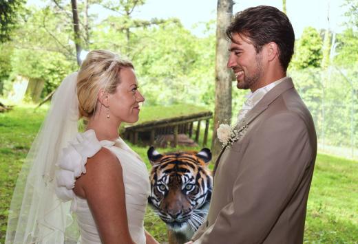 Tiger Photobombs Wedding