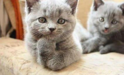 13 Animal Photobombs to Make Your Monday Awesome