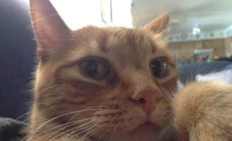 15 Cat Selfies That Prove Felines Are as Vain as You Are (or More)