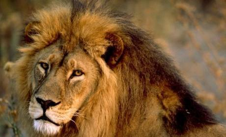 Lion Kills Woman Having Sex in Bush