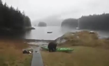 Helpless Woman Watches Bear Eat Her Kayak