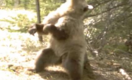 Bears Twerking: Video Captures Canadian Creatures Gettin' Down!