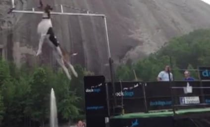 Dog Sets Vertical Jumping Record: Watch It Soar Now!