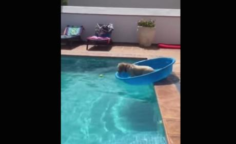 World's Smartest Dog Turns Pool into Boat, Rescues Tennis Ball