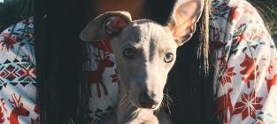 Kylie Jenner: Negligent Puppy Owner?
