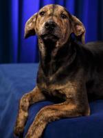 Augusta the Dog