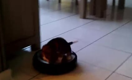 Puppy Rides Around on Roomba, Sort of Likes It