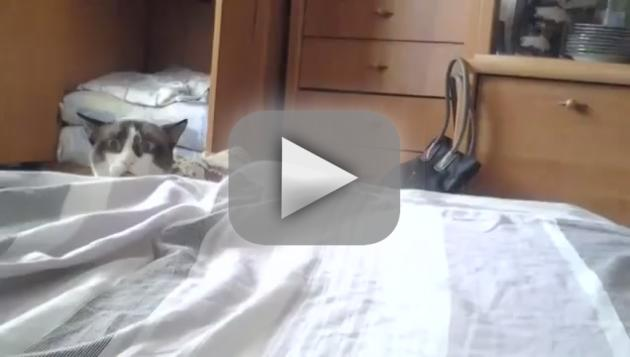 Cat Behind a Bed