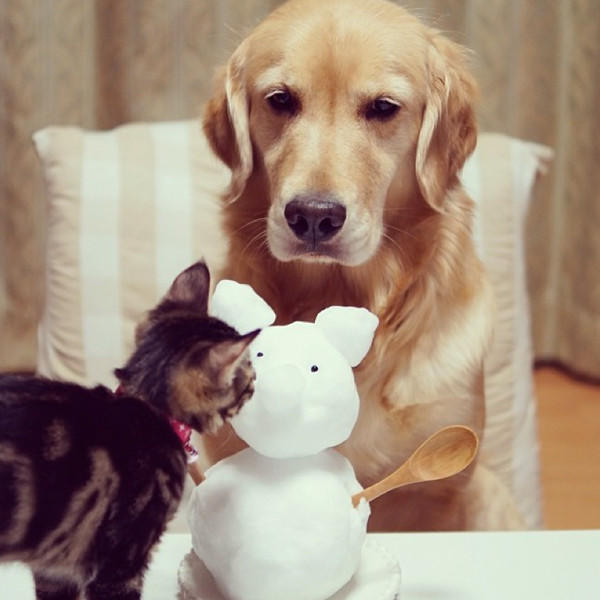 Dog Cares for Cat