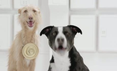 "Volkswagen Super Bowl Ad Preview: Dogs Turn to ""The Bark Side"""