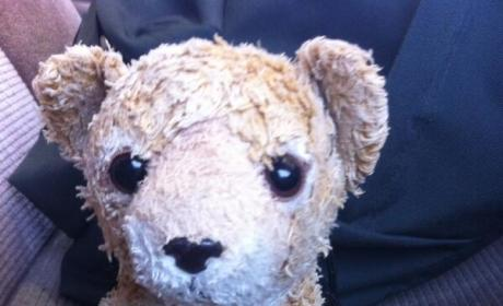 Internet Helps Lost Stuffed Animal Reunite With Owner