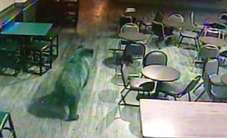 Bear Walks Into Colorado Bar, Stays Sober