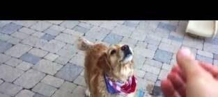 Dog Fails to Catch Things in His Mouth
