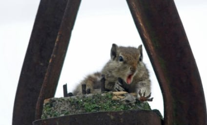 Squirrel Drops Nut From Pole, Reacts in Hilarious, Devastated Fashion