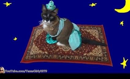 Cat Dresses as Princess Jasmine, Rides Magic Carpet-Covered Roomba