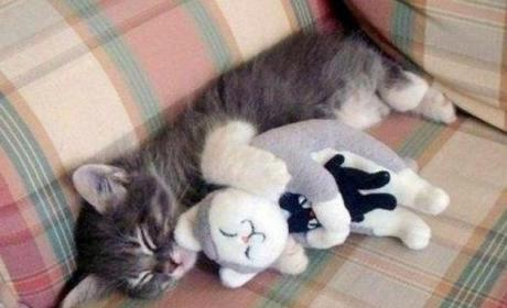 Happy World Cat Day! 37 Furry, Fun Photos of Our Feline Friends