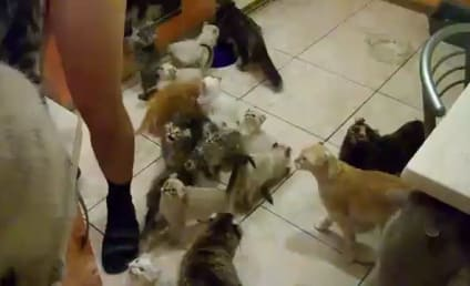 Guy Really Needs to Feed Insane Cats, Put on Pants