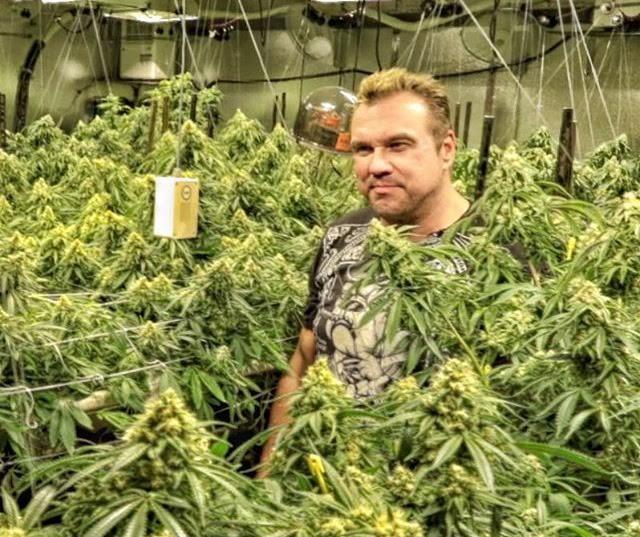 Marijuana enclose and the timberland of weed