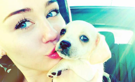 Miley Cyrus Adopts New Puppy!