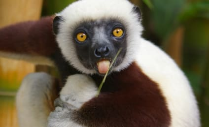 Zoboomafoo Lemur Dies at 20; Co-Star Pays Respects