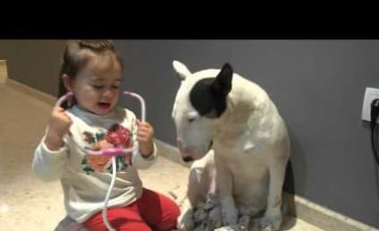 Most Patient Dog Ever Undergoes Check-Up from Adorable Tiny Doctor