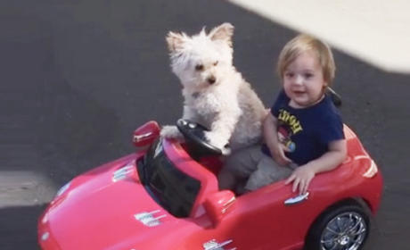 Puppy Drives Tiny Owner Around in Tiny Car