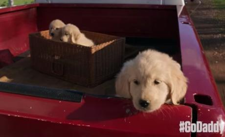GoDaddy Pulls Adorably Offensive Super Bowl Ad