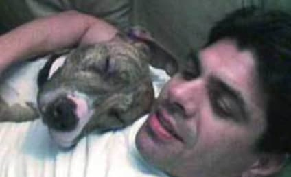 Nick Santino, Struggling Soap Opera Actor, Commits Suicide After Euthanizing Dog