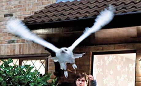 Farewell, Owl