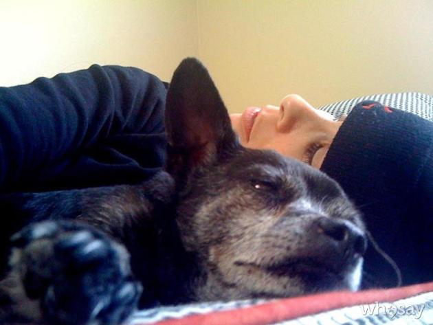 Sarah Silverman, Dog